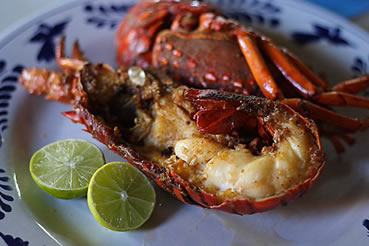 Visitor information for san diego area for Lobster fishing san diego